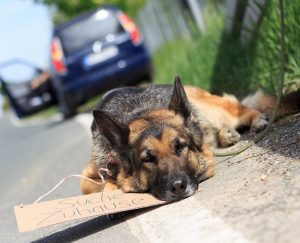 hund_strassenrand_toni-ev